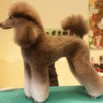 Best Clippers For Poodles