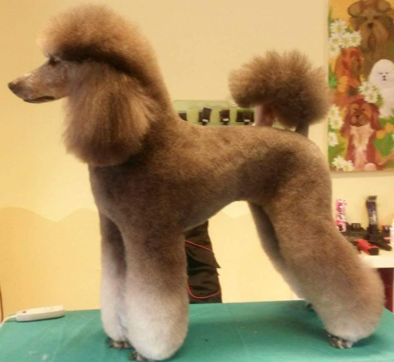Best Clippers For Poodles 2019
