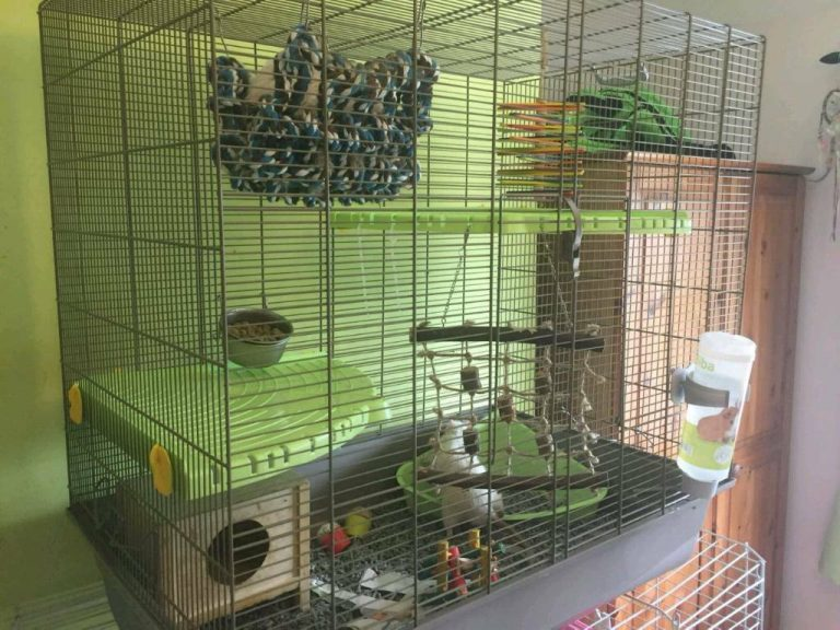 The 8 Best Rat Cages 2020 Reviews